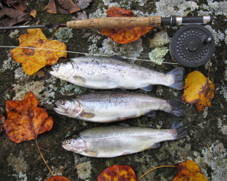 GO-Cottage fall fly fishing