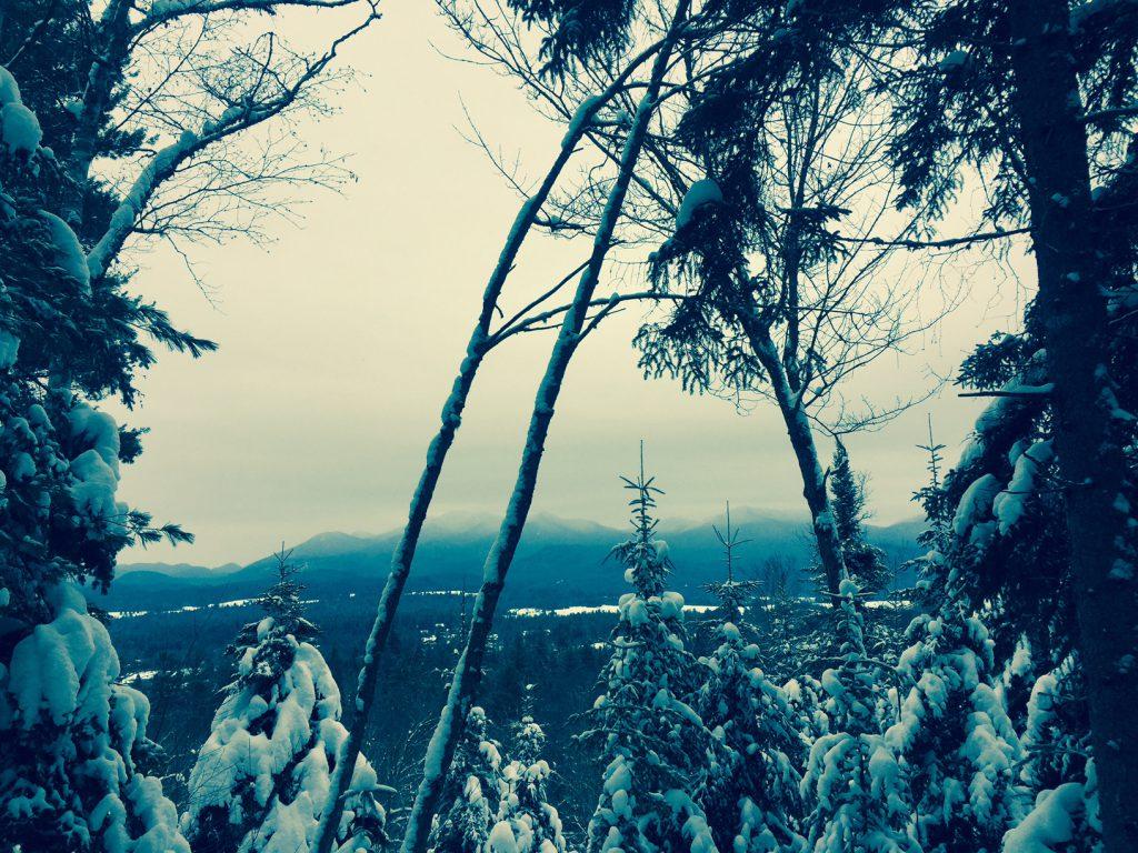 henrys-woods